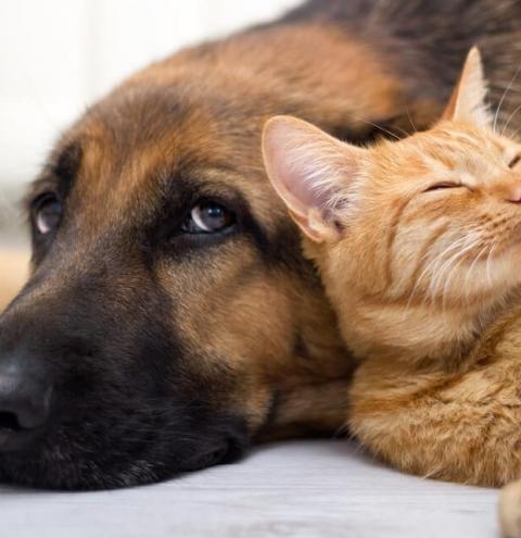 Sancionada lei que autoriza visita de animais domésticos a pacientes internados em hospitais