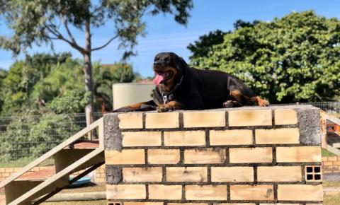 O dia a dia do cão policial do 9º Batalhão de Polícia Militar