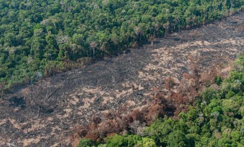 Ação para conter desmatamento começou tarde, diz Mourão sobre aumento de alertas na Amazônia