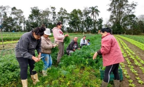 Do campo para a mesa – Dia do Agricultor reforça o papel deste importante setor